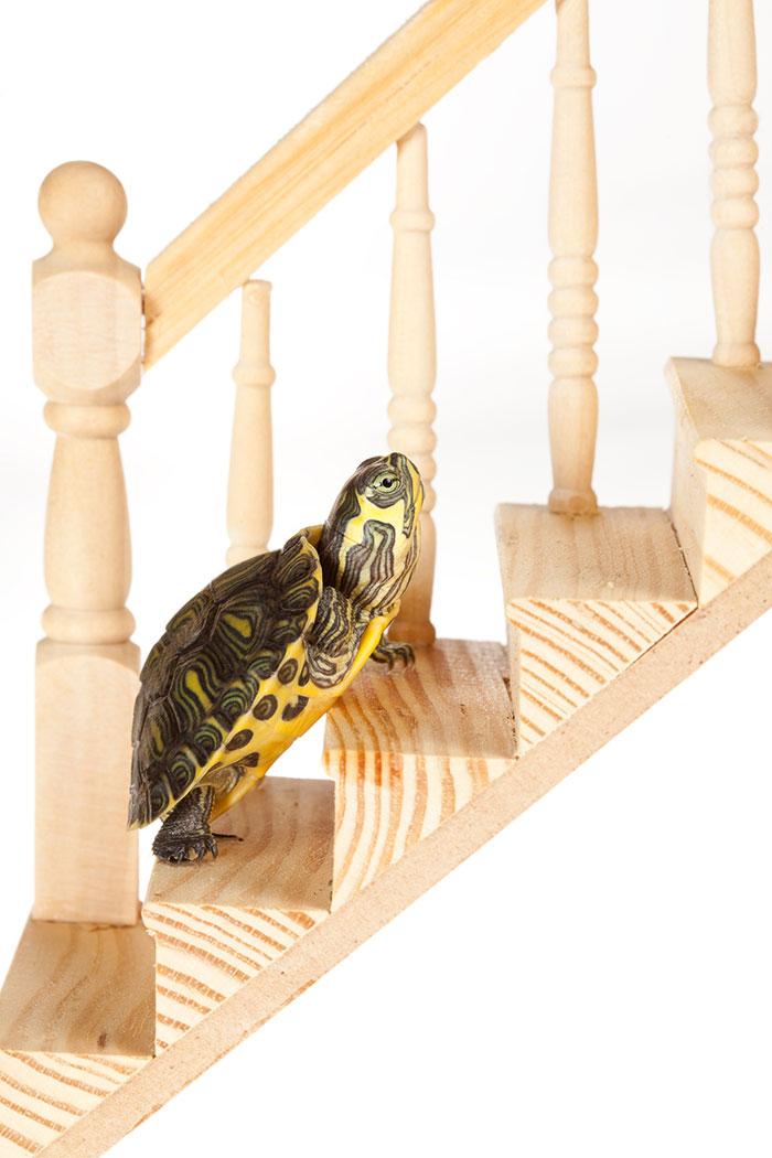 Turtle-web-700